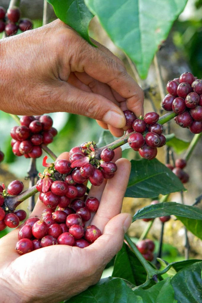 From Bean to Cup Coffee Master Class - Mexico Virtual Coffee tasting